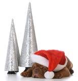 Щенок рождества Стоковая Фотография RF