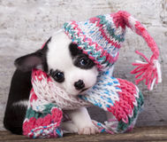 Щенок смешно одел для knit шляпы стоковая фотография rf