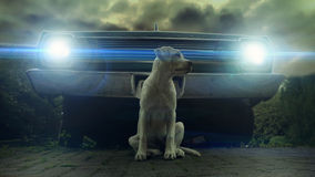 Щенок собаки Лабрадора сидя перед винтажным автомобилем Стоковое фото RF