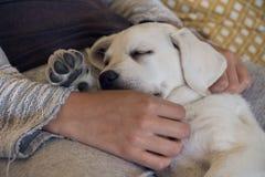 Щенок собаки спать утомлен и мечтает Стоковые Изображения