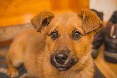 Щенок собаки Унылый щенок собаки Стоковое фото RF
