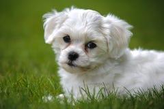 щенок собаки стоковые изображения