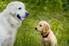 щенок собаки стоковое изображение rf