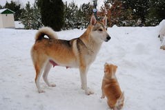 щенок собаки Стоковые Фотографии RF