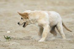 щенок цветка Стоковая Фотография