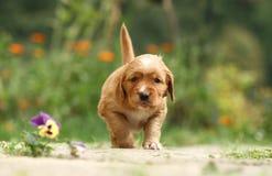 щенок цветка Стоковые Фотографии RF