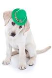 Щенок для St. Patrick Стоковые Фото