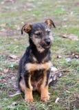 щенок Стоковое фото RF