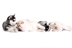 щенок Стоковые Изображения RF