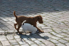 щенок 2 Стоковые Фото