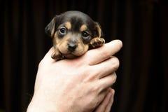 щенок Стоковая Фотография