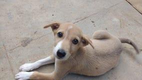 щенок стоковое фото