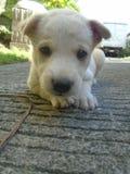 щенок Стоковые Изображения