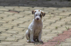 щенок Стоковые Фото