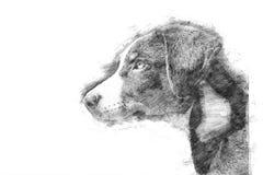 Щенок Appenzeller - стиль эскиза стоковое фото rf