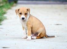 щенок breed милый смешанный Стоковая Фотография RF