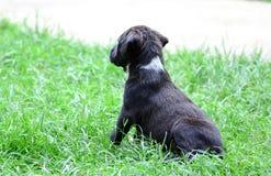 щенок breed милый смешанный Стоковое фото RF