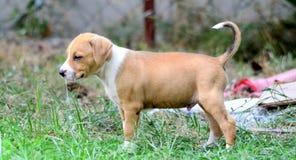 щенок breed милый смешанный Стоковые Фото