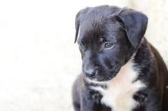 щенок breed милый смешанный Стоковое Изображение RF