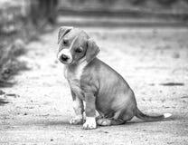 щенок breed милый смешанный Стоковое Изображение