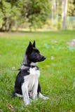 Щенок Laika, Doggy Стоковое фото RF
