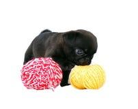 Щенок Mopsa черноты пахнет шариком пряжи шерстей стоковая фотография rf