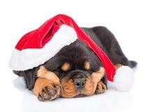 Щенок Rottweiler в красной шляпе santa На белой предпосылке Стоковые Фотографии RF