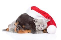 Щенок Rottweiler и малый котенок в красной шляпе santa Изолированный дальше Стоковые Изображения