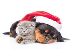Щенок Rottweiler и малый котенок в красной шляпе santa Изолировано на белизне Стоковая Фотография RF