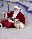 щенок s santa Стоковые Фотографии RF