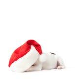 щенок santa шлема Стоковые Фото