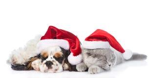 Щенок Spaniel кокерспаниеля и крошечный котенок спать в красных шляпах santa Стоковое Фото