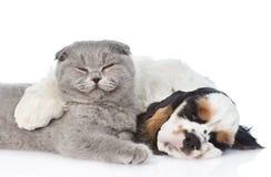 Щенок Spaniel кокерспаниеля спать обнимает кота Изолировано на белизне Стоковая Фотография