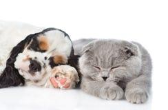 Щенок Spaniel кокерспаниеля спать с котом Изолировано на белизне Стоковые Изображения RF
