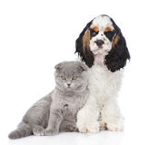 Щенок Spaniel кокерспаниеля с молодым котенком Изолировано на белизне Стоковое Фото