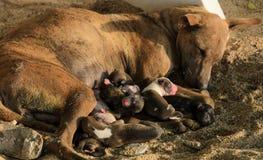Щенята бездомной собаки кормя грудью Стоковые Фото