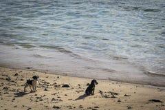 Щенята на пляже Стоковое Изображение
