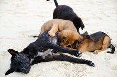 Щенята питания собаки милые на пляже песка Стоковая Фотография RF