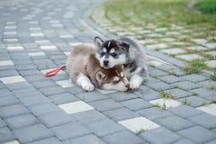 2 щенят осиплого Собаки сора спать на улице Стоковая Фотография