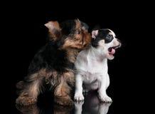 2 щенят Стоковая Фотография