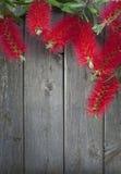 Щетка бутылки цветет деревянная предпосылка Стоковая Фотография