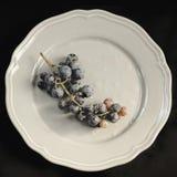 Щетка виноградин на серой плите Стоковые Изображения RF