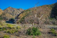 Щетка дерева в каньоне Калифорнии Стоковое Изображение RF
