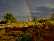 Щетка и радуга кролика стоковое фото