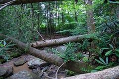 Щетка и сочный лес стоковые фотографии rf