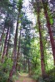 Щетка и сочный лес стоковое фото