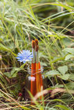 Щетки с цикорием цветут в бутылке на предпосылке gra Стоковое Фото
