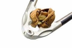 Щелкунчик трескает грецкий орех изолированный на белой предпосылке Стоковые Изображения RF