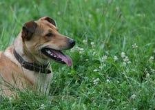 щипок головки собаки Стоковая Фотография RF