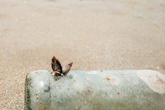 Щипцы гусыни прикрепленные к бутылке на пляже Стоковые Изображения RF
